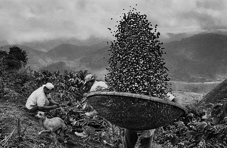 """SCENT OF A DREAM"",  by Salgado, a journey in  the world of coffee"